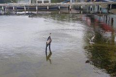 Dinho-na-Lagoa-da-Conceição-06
