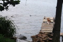 Dinho-na-Lagoa-da-Conceição-21